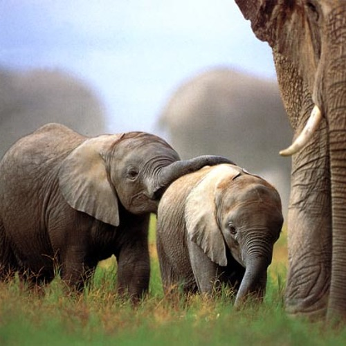 Matt Baker & John Styles - Elephants Mother