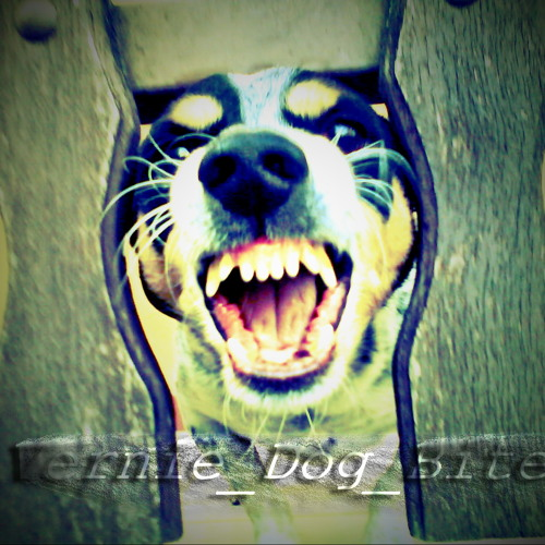 Vernie - Dog Bites (Original Mix)