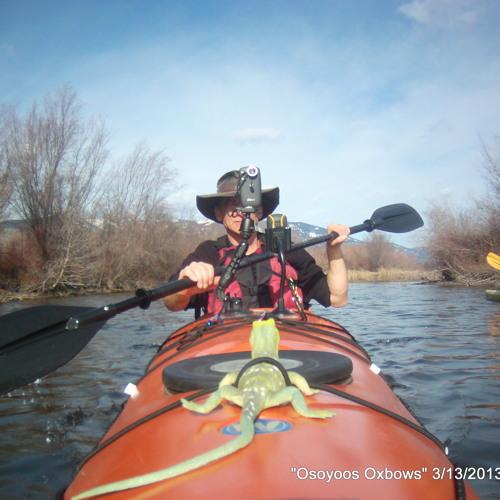 Red-winged Blackbird (Agelaius phoeniceus) Kayaking Audio 100 0131