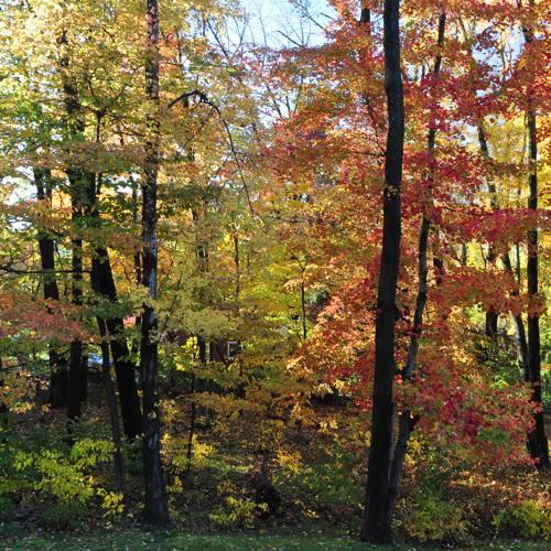 On An Autumn Day