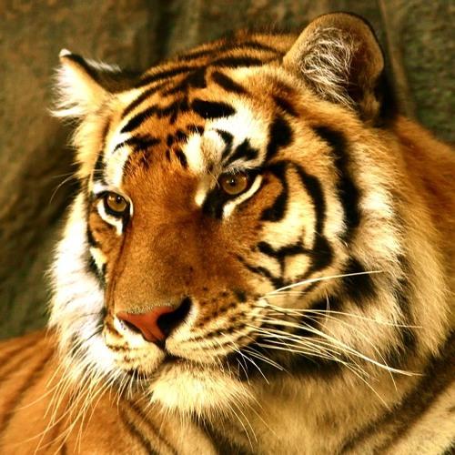 Bronce - Tigres con bengalas