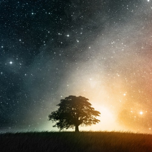 Tim Roscoe - Night