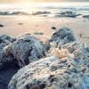 Karang-pantai dan laut lepas