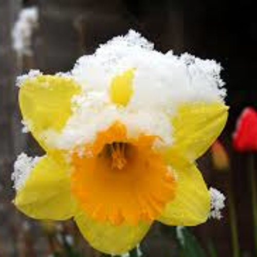 SpringWhereArtThou