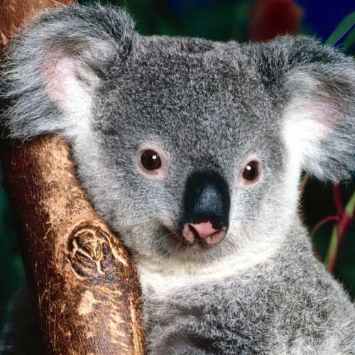Daniel Bortz - Australia Tour Podcast