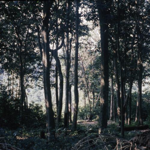 BaAka boyobi spirits & whistling (Bounguingi, Republic of Congo, 1994) [1997 21 2 110 A 4]
