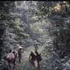 A BaAka spirit whistling a boyobi tune (Central African Republic, 1994) [1997 21 2 118 B 2]