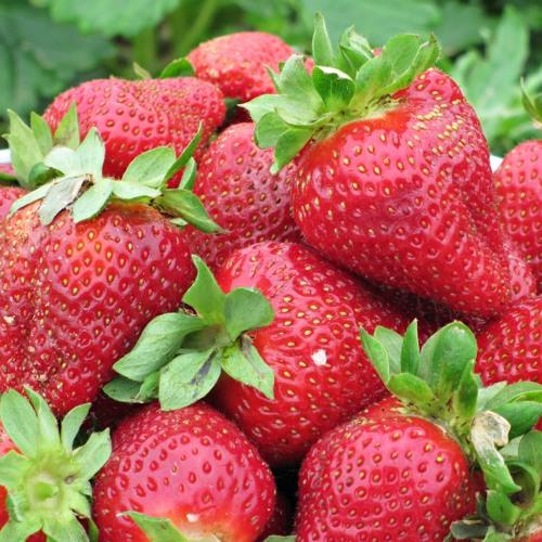 Strawberries (Free Download)