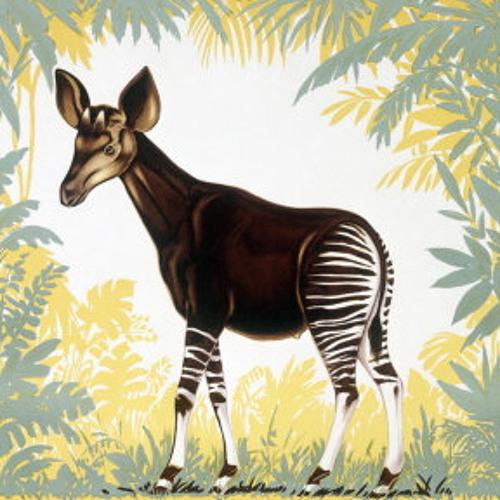 Kotelett&Zadak-Okapi
