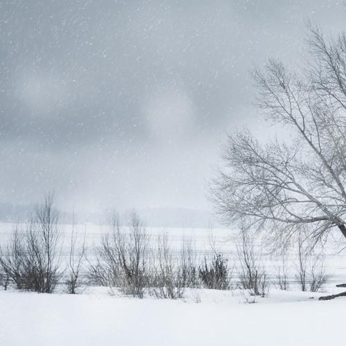 Late Winter Fade
