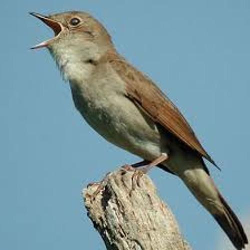 Bird with Beatbox