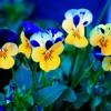 Deejay Trax --- MISTIC SOUND 17 --- 2013 (((Primavera)))