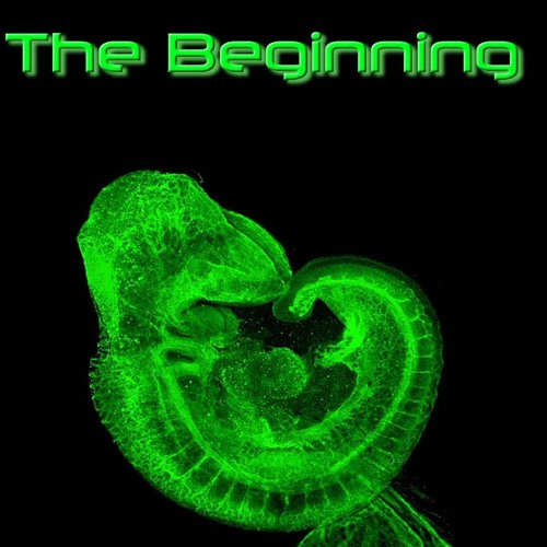 The Beginning : Album by Trevor Harker