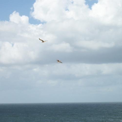 Running after gulls