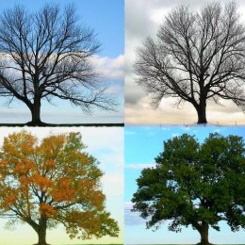 The 4 Seasons Of Alqonquin 2013