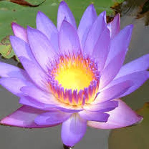 Namarrkon - Open Lotus