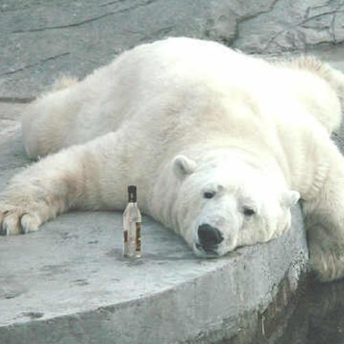 Drunken bear /// wip