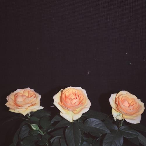 Died in 1994