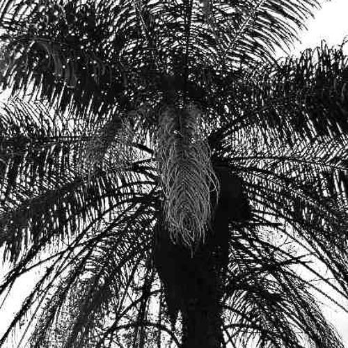 Francisco Mignone: Modinha, 1939