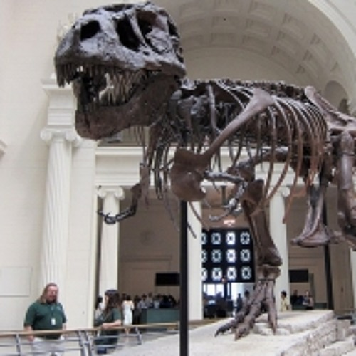 Field Museum offers curators early retirement