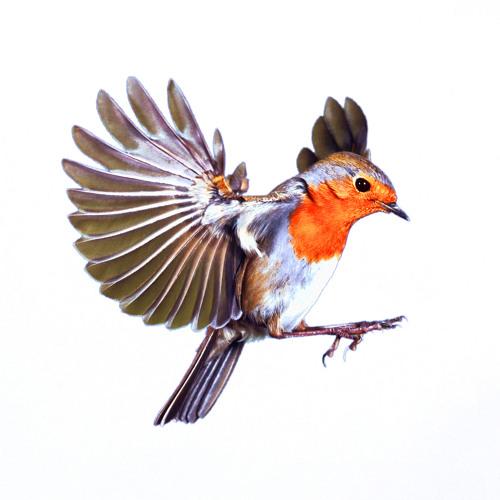 shrOOmix - The Bird 162bpm