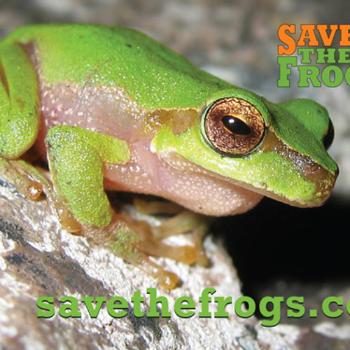 Save The Frogs Swamp Sounds