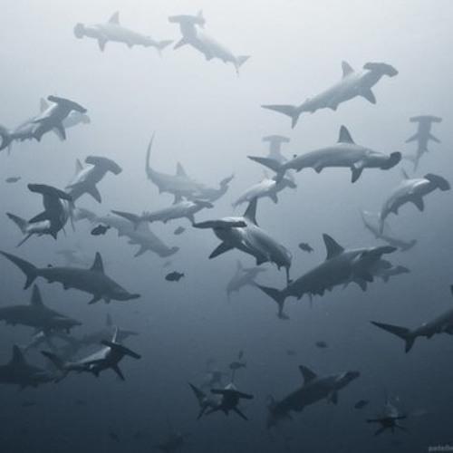 Janus Is God - Sharks vs Jests