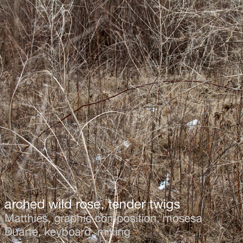 Arched wild rose, tender twigs (Matthies, graphic composition, mosesa, Duarte, keyboard, mixing)