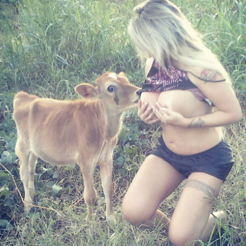 Sabrina Boing Boing breastfeeds a cow
