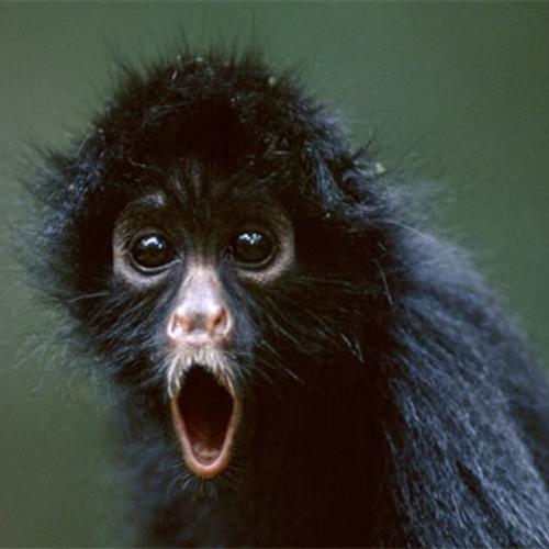 Black Monkey Dishwasher