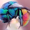 Flying Through Rainbows
