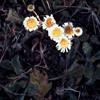 Spring waltz 13