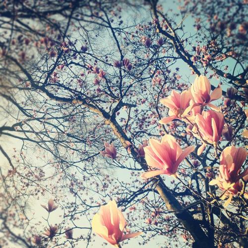 M!ke .. - Frühlingsgefühle ((♥))