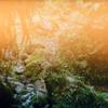 Woods (Bon Iver Edit)