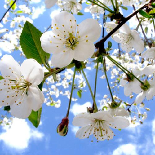 Duff Bensky - Endlich Frühling