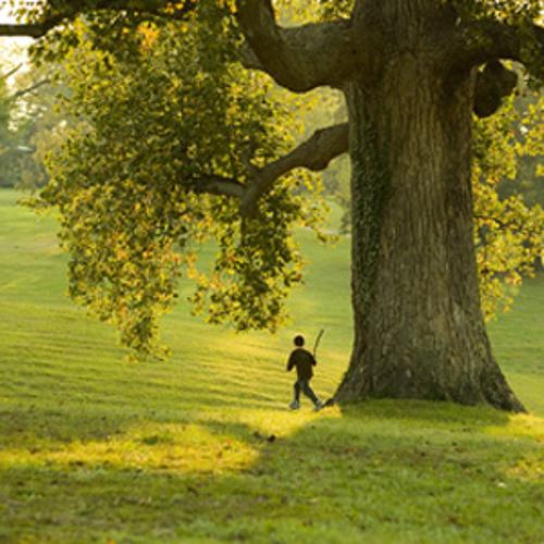4. Climbing The Tree (The Boy & The Tree)