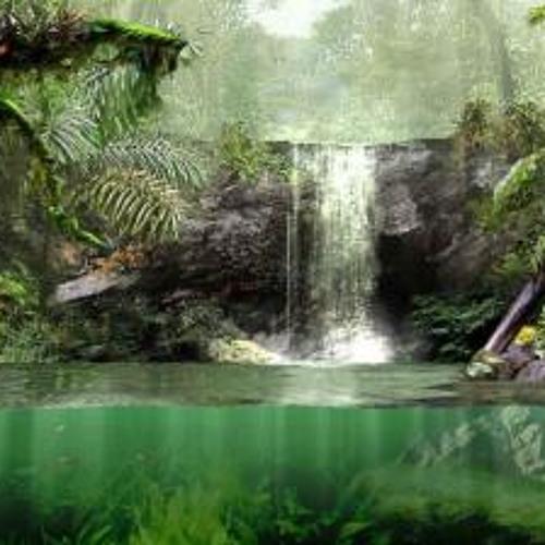 Rainforest - tree Mix