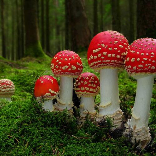 FedeGz - Fungus