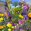 Spring, the sweet spring, Thomas Nashe, John, Danny