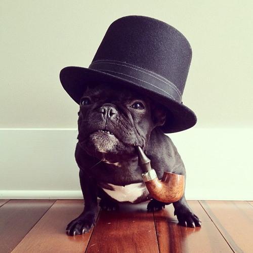 Monsieur Flederhund