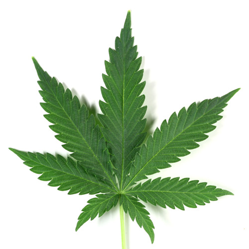 Habemos Marijuana (Prod. ioda Beats)