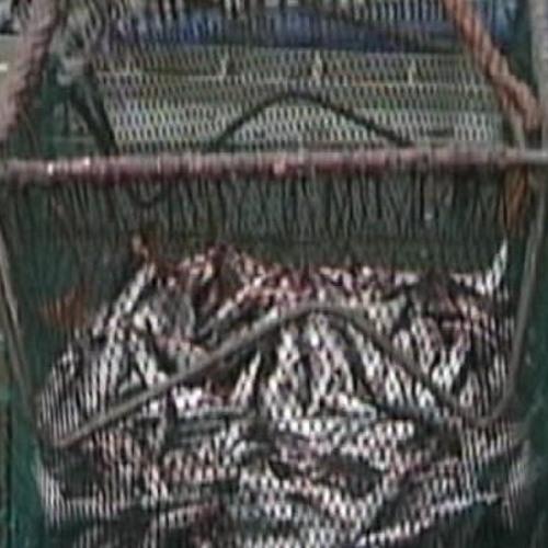 Super trawler back fishing off Irish coast