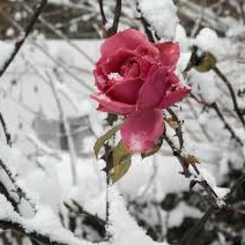 DnBeatz Productions- Winter Rose (East Coast RAP Instrumental) youtube.com/DnBeatzproductions