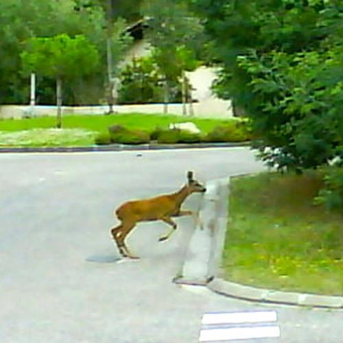 Fast Pedestrian