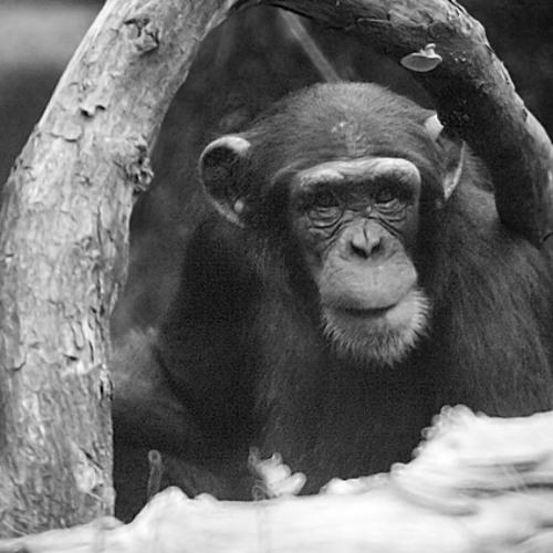 Frans de Waal: Primates, evolution and morality