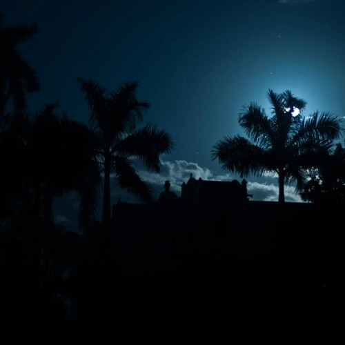 Palm Tree Chillin'