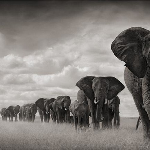 Beau Louis-City full of elephants