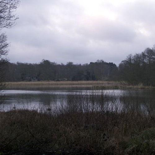 Burton Ponds, dawn chorus