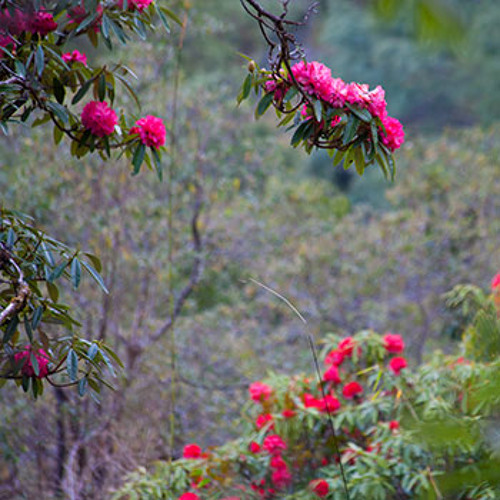 Spring in the Himalayan Foothills - Recorded in Shivapuri National Park, Nepal
