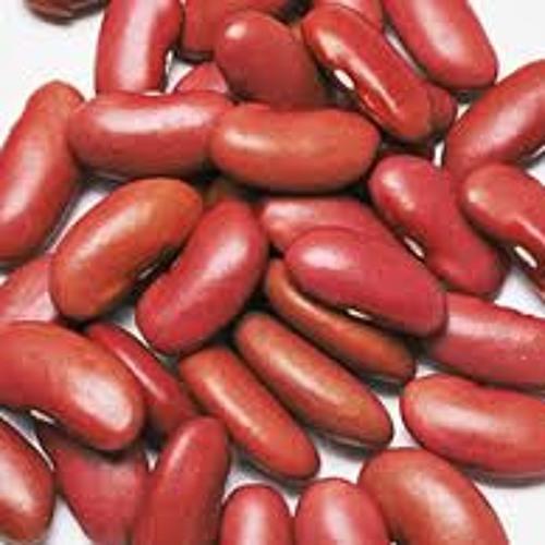 Stoudt Beans